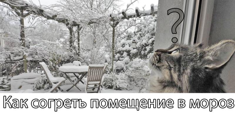 Кошка вся в раздумьях!